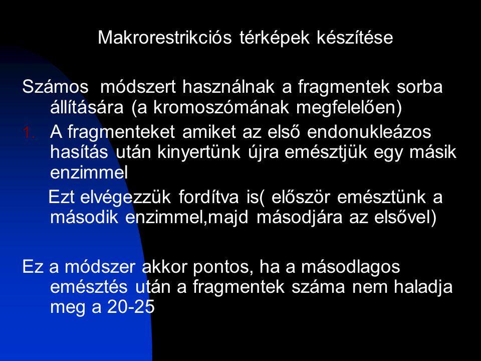 Makrorestrikciós térképek készítése Számos módszert használnak a fragmentek sorba állítására (a kromoszómának megfelelően) 1.