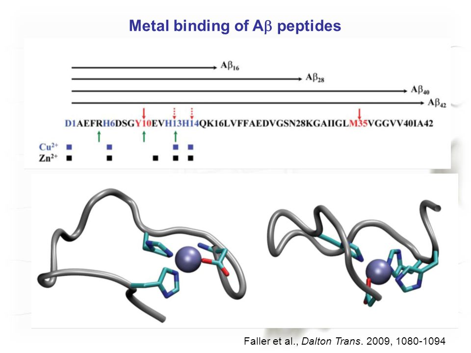 Metal binding of A  peptides Faller et al., Dalton Trans. 2009, 1080-1094