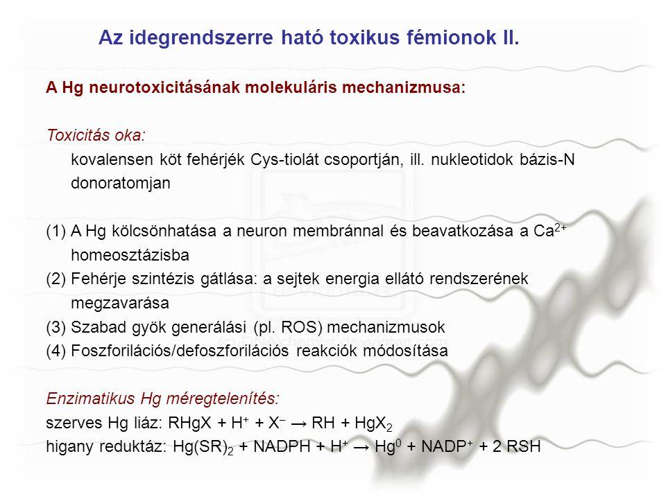 MANGÁN Behatás: acélipar (Mn, mint ötvöző), szárazelem gyártás (MnO 2 /NH 4 Cl/Zn), bányászat, kohászat, üzemanyag adalék (ciklopentadienil-Mn-(CO) 3 ) Parkinson-kórhoz hasonló tünetegyüttes Csökkent dopaminszint a Mn érc bányászoknál Közös alap: a Mn 2+ beavatkozik a biogén aminok oxidatív lebomlásába A Mn mint változó oxidációs állapotú fémion alkalmas erre; fokozza a szabad gyökök képződését, ami a lipid peroxidációt gyorsítja és citotoxicitást eredményez.