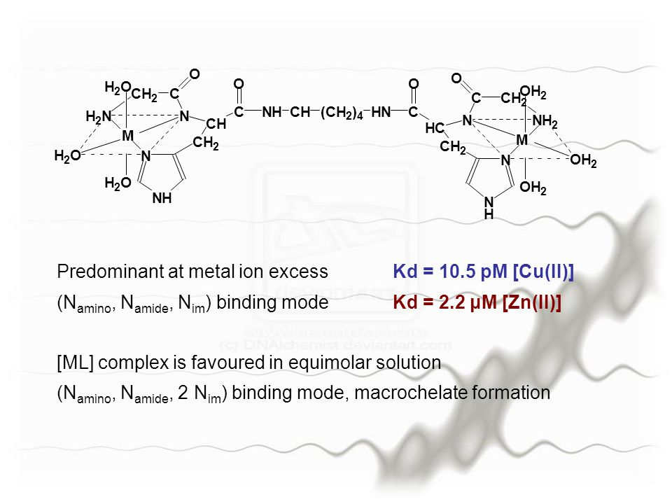 Predominant at metal ion excessKd = 10.5 pM [Cu(II)] (N amino, N amide, N im ) binding modeKd = 2.2 μM [Zn(II)] [ML] complex is favoured in equimolar solution (N amino, N amide, 2 N im ) binding mode, macrochelate formation