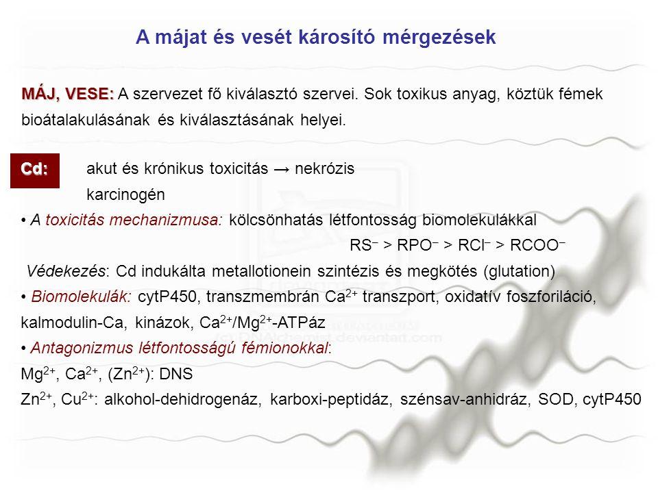 Cd: Cd:akut és krónikus toxicitás → nekrózis karcinogén A toxicitás mechanizmusa: kölcsönhatás létfontosság biomolekulákkal RS – > RPO – > RCl – > RCO