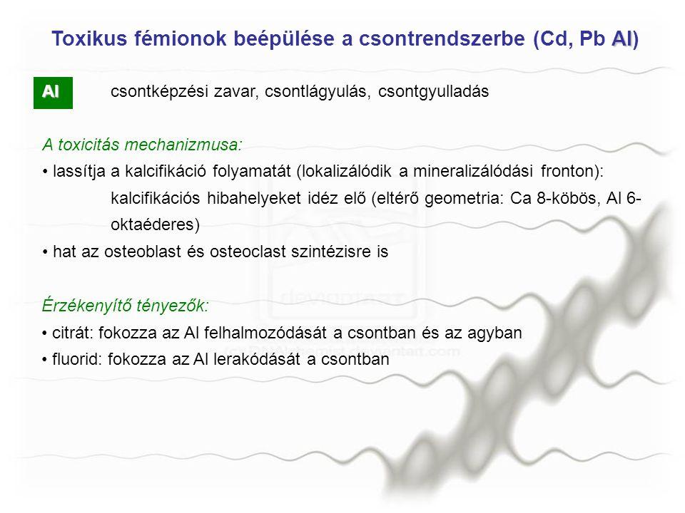 Al Alcsontképzési zavar, csontlágyulás, csontgyulladás A toxicitás mechanizmusa: lassítja a kalcifikáció folyamatát (lokalizálódik a mineralizálódási