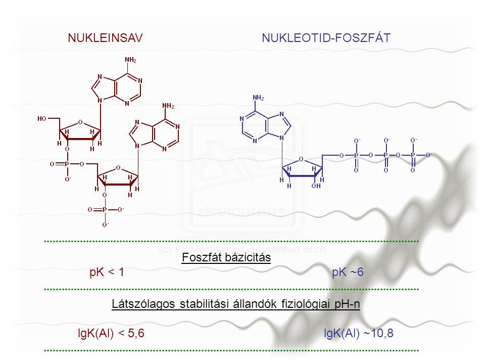 NUKLEINSAVNUKLEOTID-FOSZFÁT Foszfát bázicitás pK < 1pK ~6 Látszólagos stabilitási állandók fiziológiai pH-n lgK(Al) < 5,6 lgK(Al) ~10,8