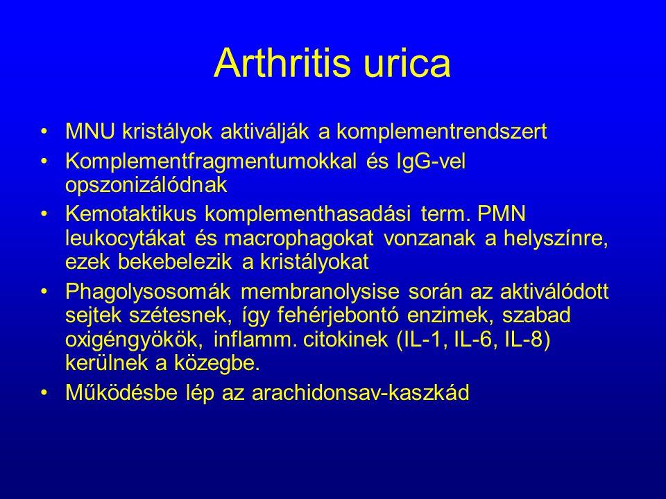 Arthritis urica MNU kristályok aktiválják a komplementrendszert Komplementfragmentumokkal és IgG-vel opszonizálódnak Kemotaktikus komplementhasadási t