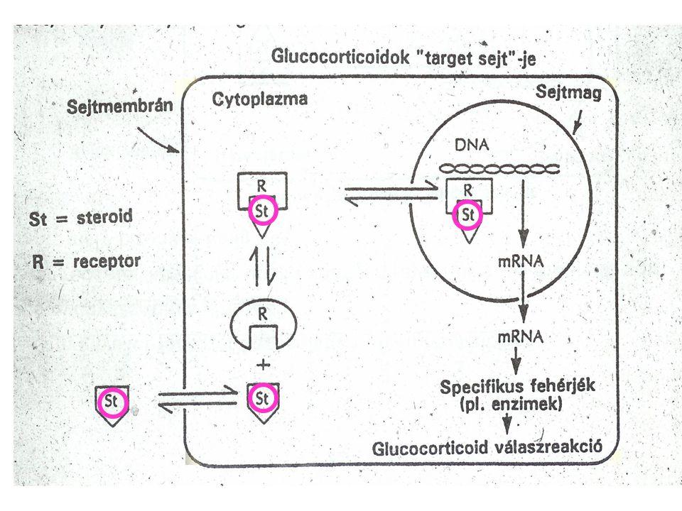 THEOPHYLLIN -Keskeny therápiás ablak therápiás ablak (10-20  g / L ) (10-20  g / L ) - Alkalmassága vitatott, akut kezelésre nem ajánlható - ß 2 + Theophyllin = + Theophyllin = ellentmondó eredmények - A kezelés második vonalában használható Ha a beteg eddig még nem kapott Telítő adag : 6 mg / kg >20 min alatt Ezután : 0,5 mg / kg / h (6 órával az infusio megkezdése után szintet mérni!) GYÓGYSZER INTERAKCIÓK - A METABOLISMUS MEGVÁLTOZHAT.