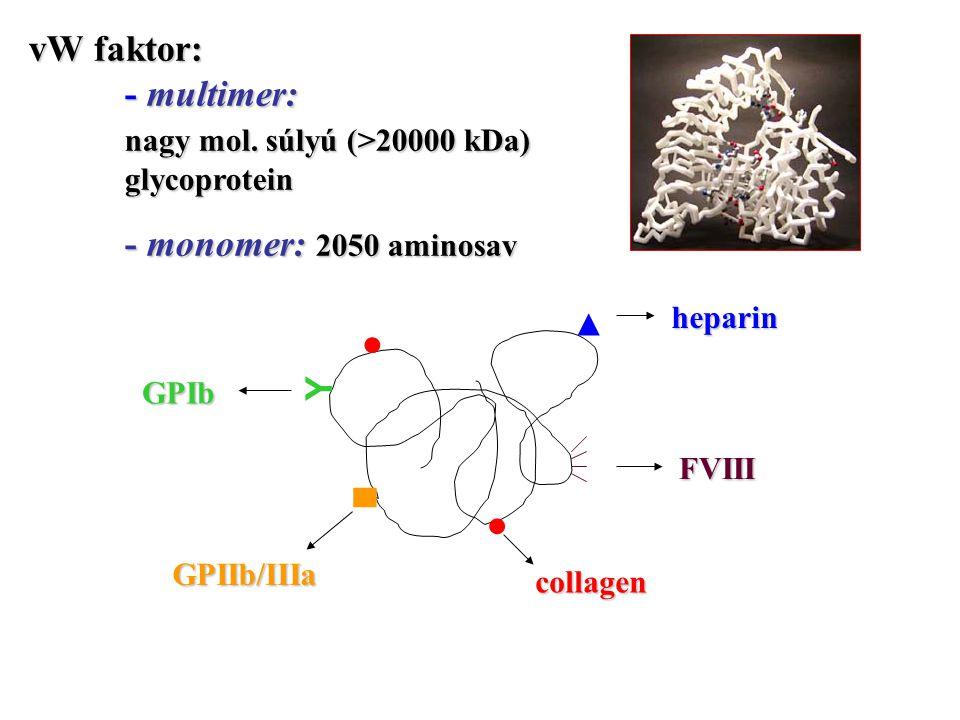 vW faktor: - multimer: nagy mol. súlyú (>20000 kDa) glycoprotein - monomer: 2050 aminosav ● ▲ Y ● ▀ heparin FVIII collagen GPIb GPIIb/IIIa