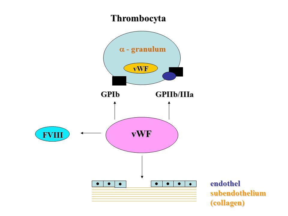vWF GPIb GPIIb/IIIa GPIb GPIIb/IIIa  - granulum  - granulum Thrombocyta Thrombocyta FVIII vWF vWF     endothel subendothelium (collagen)