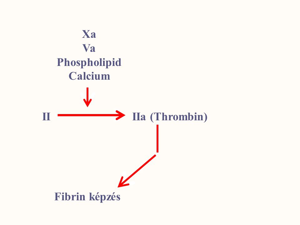 Xa Va Phospholipid Calcium II IIa (Thrombin) V, VIII, XIII aktiváció Thrombocyta aktiváció Fibrin képzésProtein C aktiváció