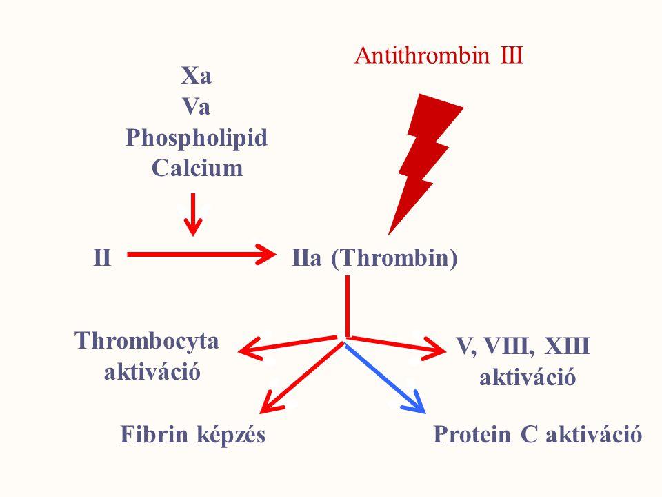 Xa Va Phospholipid Calcium II IIa (Thrombin) V, VIII, XIII aktiváció Thrombocyta aktiváció Fibrin képzésProtein C aktiváció Antithrombin III
