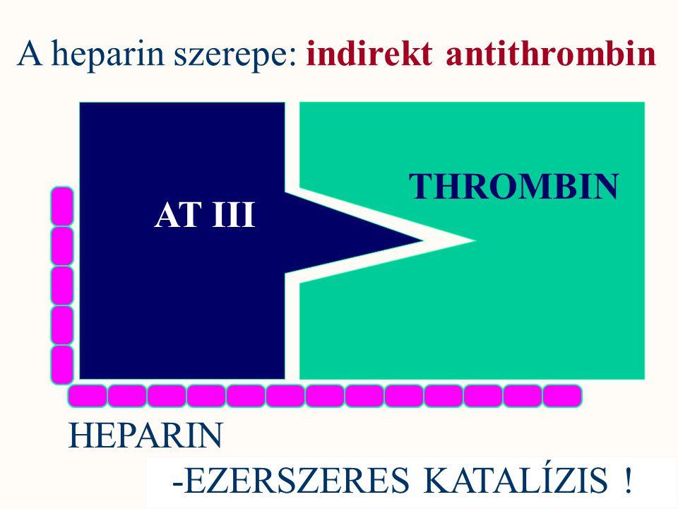 AT III THROMBIN HEPARIN -EZERSZERES KATALÍZIS ! A heparin szerepe: indirekt antithrombin