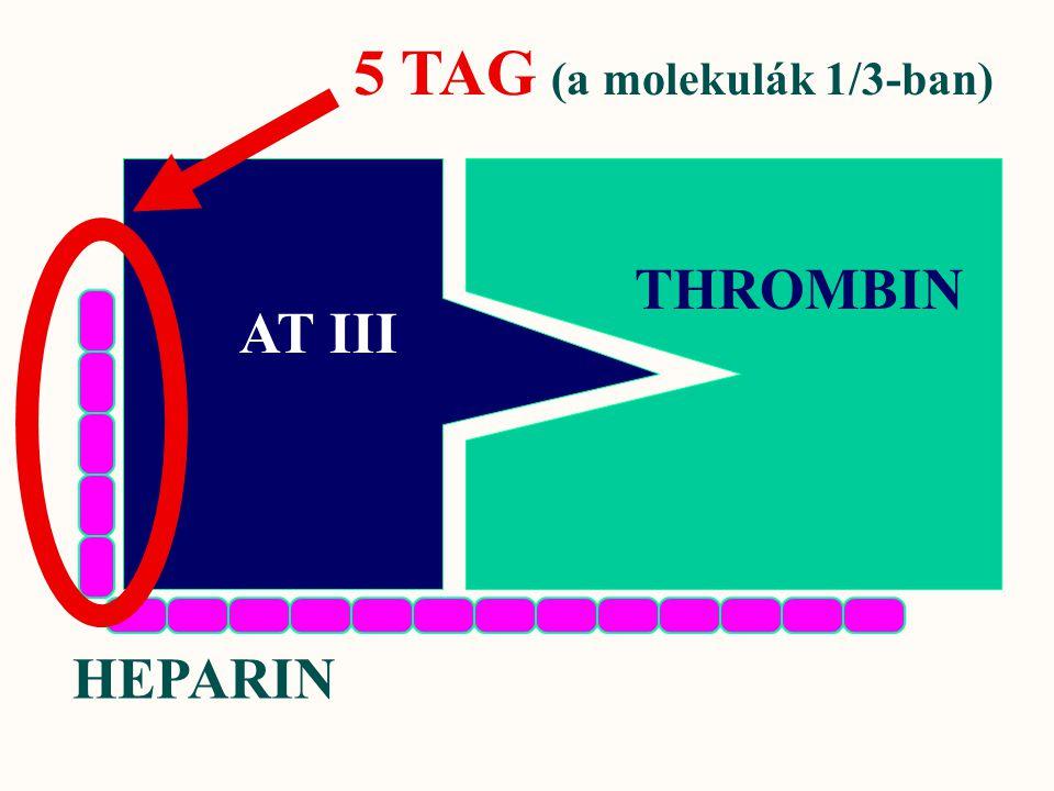 AT III THROMBIN HEPARIN 5 TAG (a molekulák 1/3-ban)