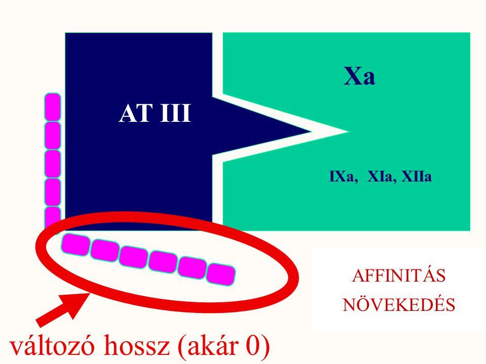 AT III Xa változó hossz (akár 0) IXa, XIa, XIIa AFFINITÁS NÖVEKEDÉS