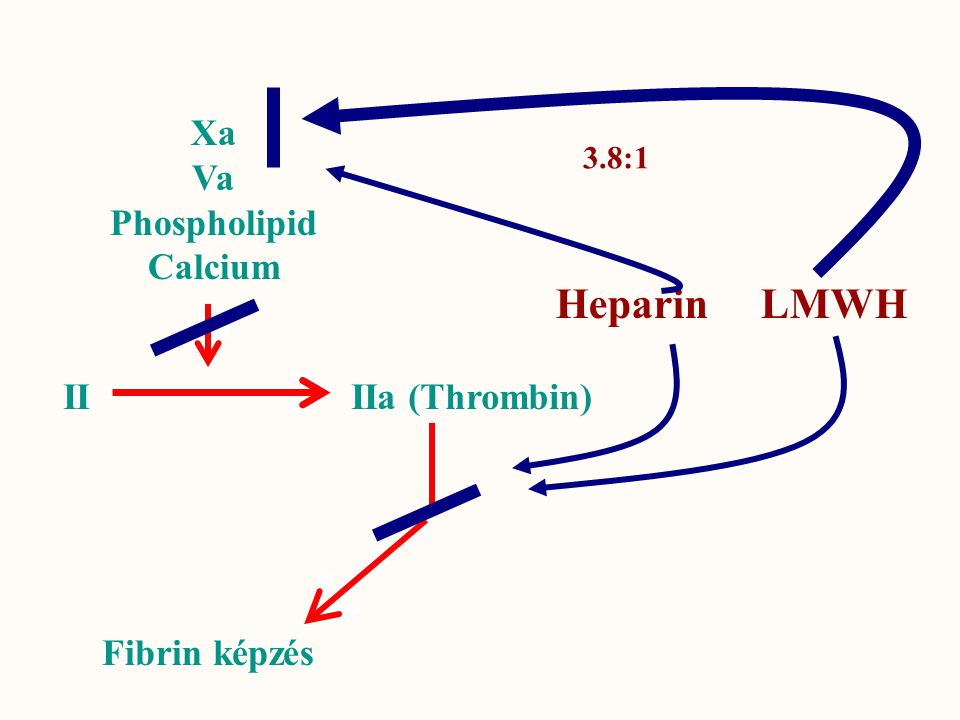 Xa Va Phospholipid Calcium II IIa (Thrombin) Fibrin képzés Heparin LMWH 3.8:1