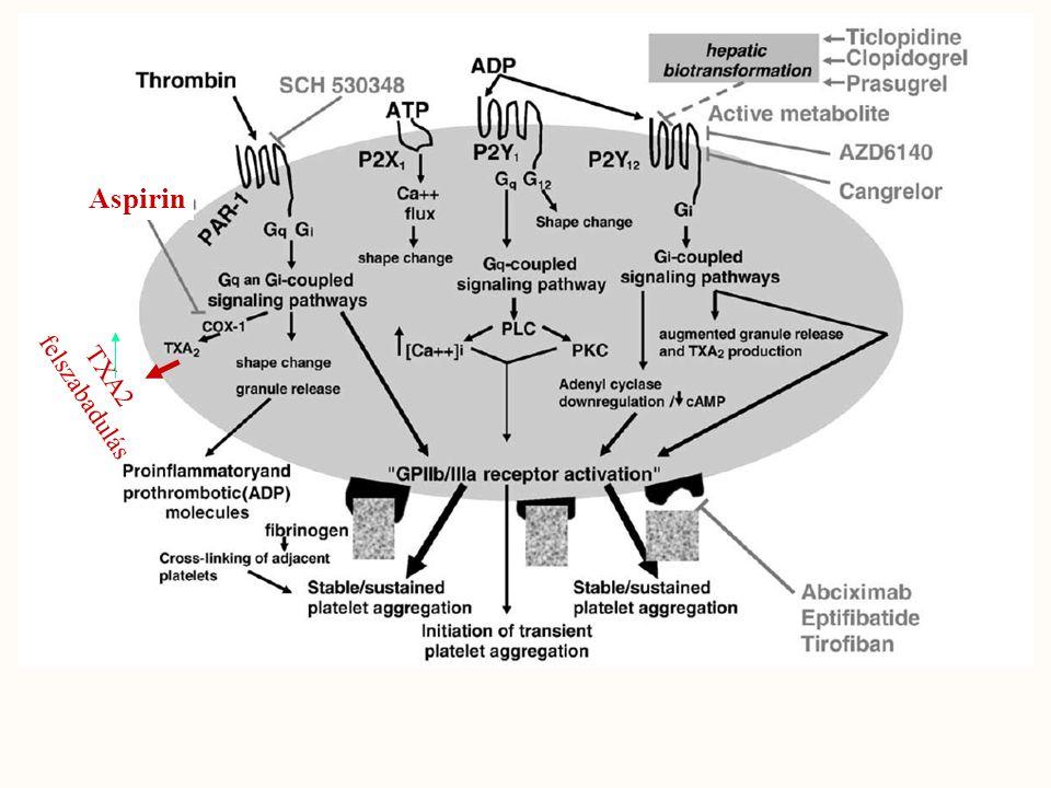 ADP Phospholipase C Protein kinase C Irreverzibilis gátlás