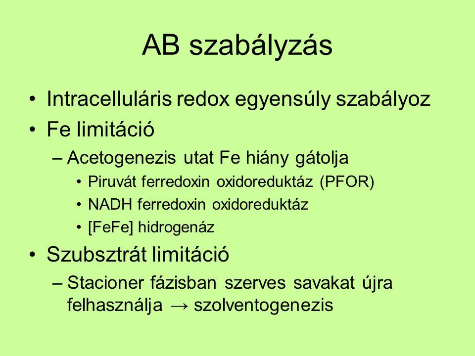 AB szabályzás Intracelluláris redox egyensúly szabályoz Fe limitáció –Acetogenezis utat Fe hiány gátolja Piruvát ferredoxin oxidoreduktáz (PFOR) NADH