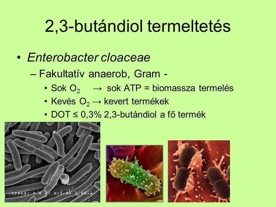 2,3-butándiol termeltetés Enterobacter cloaceae –Fakultatív anaerob, Gram - Sok O 2 → sok ATP = biomassza termelés Kevés O 2 → kevert termékek DOT ≤ 0
