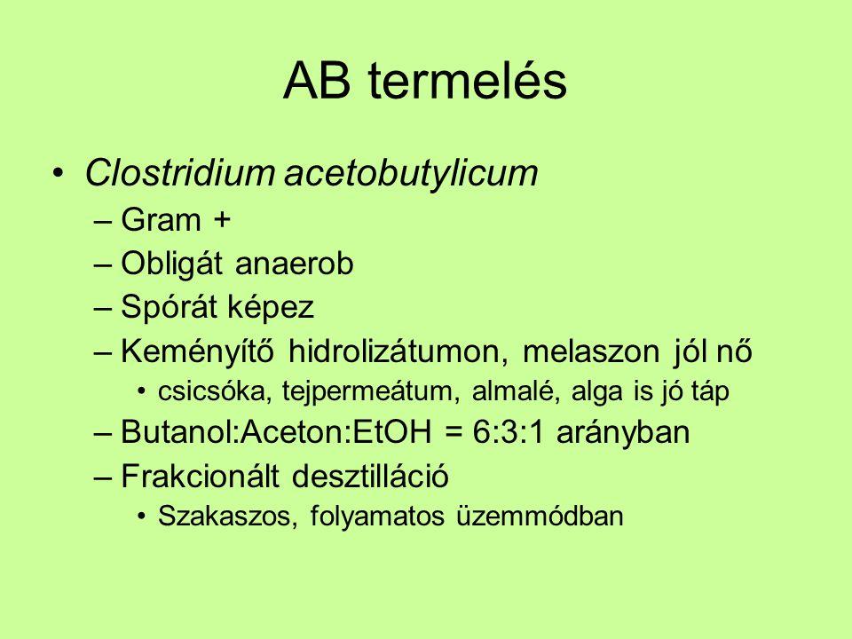 AB termelés Clostridium acetobutylicum –Gram + –Obligát anaerob –Spórát képez –Keményítő hidrolizátumon, melaszon jól nő csicsóka, tejpermeátum, almal