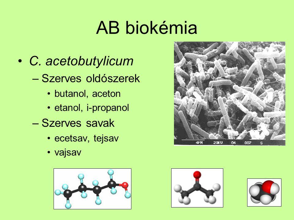 AB biokémia C. acetobutylicum –Szerves oldószerek butanol, aceton etanol, i-propanol –Szerves savak ecetsav, tejsav vajsav