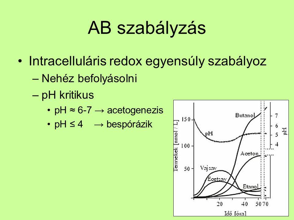AB szabályzás Intracelluláris redox egyensúly szabályoz Fe limitáció –Acetogenezis utat Fe hiány gátolja Piruvát ferredoxin oxidoreduktáz (PFOR) NADH ferredoxin oxidoreduktáz [FeFe] hidrogenáz Szubsztrát limitáció –Stacioner fázisban szerves savakat újra felhasználja → szolventogenezis