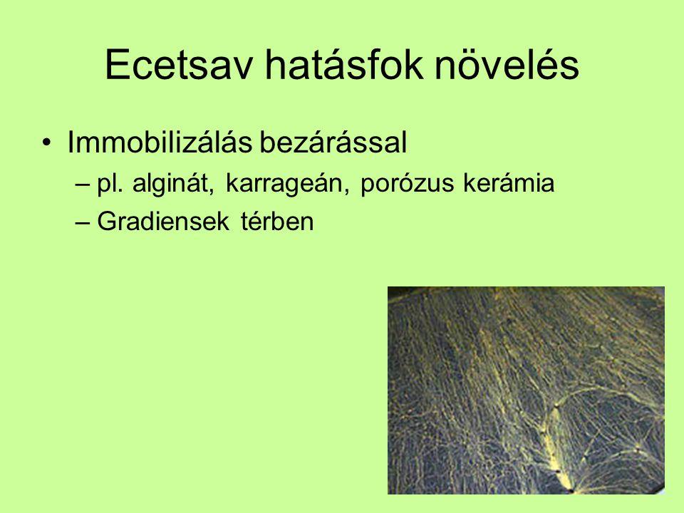 Ecetsav hatásfok növelés Immobilizálás bezárással –pl. alginát, karrageán, porózus kerámia –Gradiensek térben