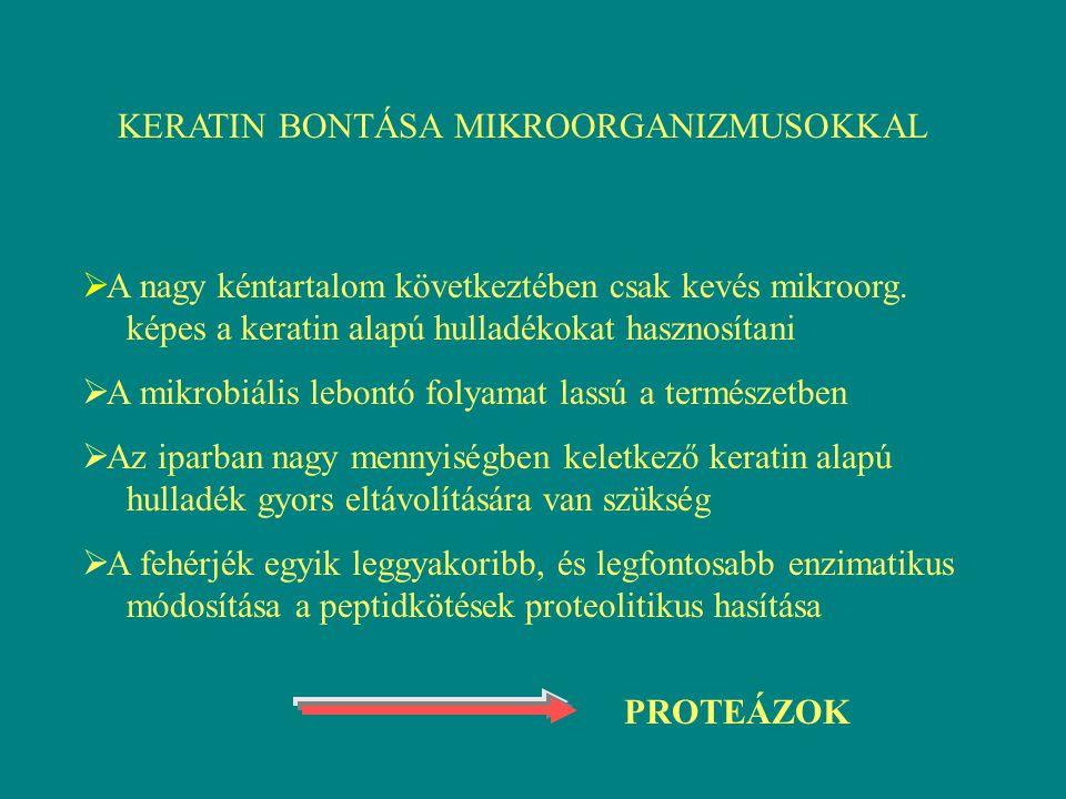  Általánosan elterjedtek  Extracelluláris, intracelluláris proteázok  Az extracelluláris proteázok ritkán konstitutívan termelődnek, általában akkor indukálódnak, ha éhezik a sejt  Fontos ipari enzimek (mosószer-, tejipar) Csoportosításuk: I.
