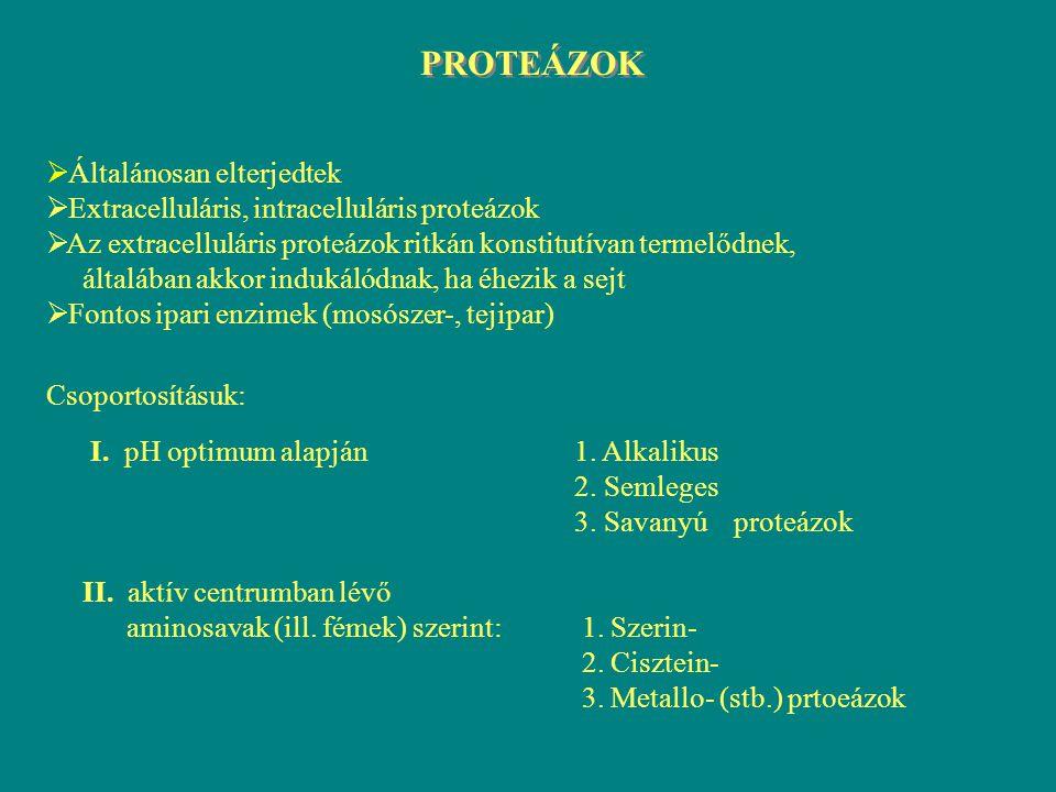savanyú proteázok- sajtgyártás (renninszerű proteázok) - orvosi gyakorlatban (pepszinszerű p.) - sütőiparban semleges proteázok (viszonylag instabilak) - bőripar - élelmiszeripar alkalikus proteázok stabilak erősen lúgos környezetben, magas hőmérsékleten -mosószeripar sok mikroorganizmus termeli, legjelentősebb termelők a Bacillus fajok Fontosabb ipari alkalmazásuk: