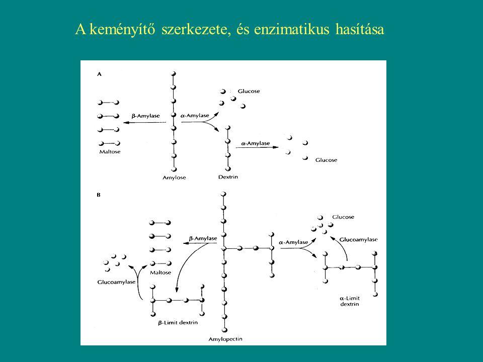A keményítő szerkezete, és enzimatikus hasítása