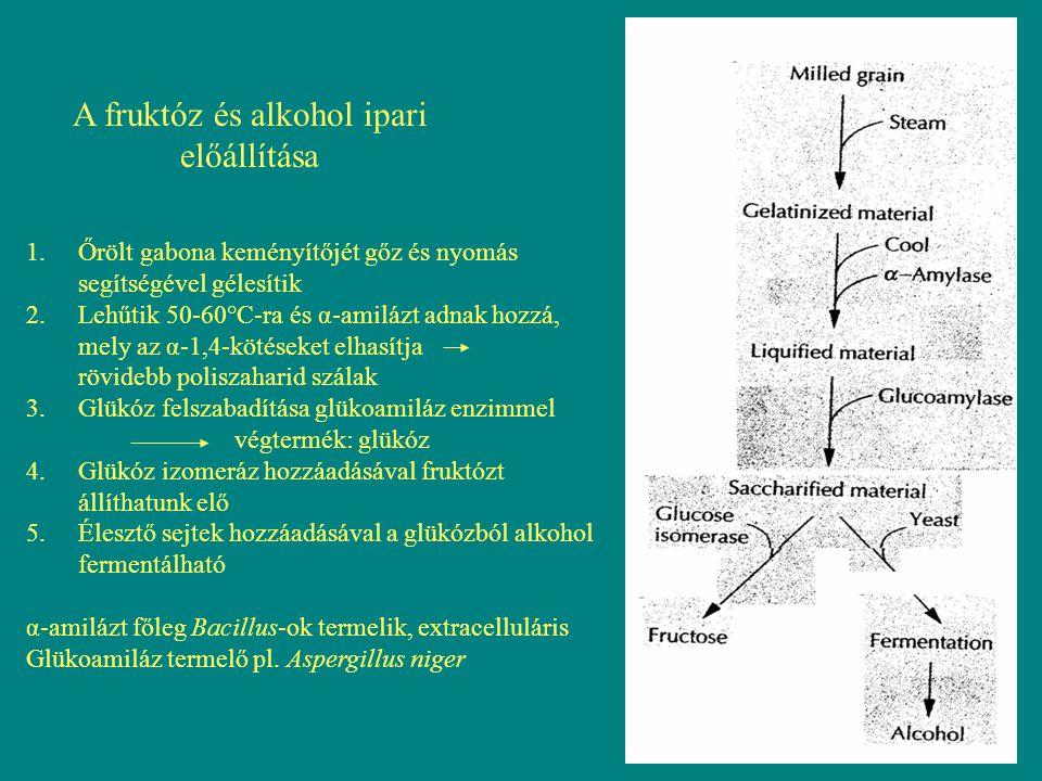 Cellulóz, xilóz hasznosítás A lignin, hemicellulóz, cellulóz polimerek különböző kombinációja egy lignocellulóz Szerkezetet ad, mely a növények szerkezeti felépítésében alapvető A lignocellulóz a növények feldolgozása során sok esetben, mint hulladék jelenik meg 1.Lignin: három dimenziós, globuláris, szabálytalan, nem oldható, nagy molekulasúlyú polimer fenilpropán alegységekből különböző kémiai kötésekkel kapcsolódva épül fel kémiai kötésekkel kapcsolódik a hemicellulózhoz, és a cellulóz szálakat beburkolja felelős a növény rigiditásáért, a mechanikai behatásokkal és mikroorganizmus támadásokkal szembeni ellenállóképességért 2.Hemicellulózok: rövid láncú, heterogén polimerek - hexózokat (pl.