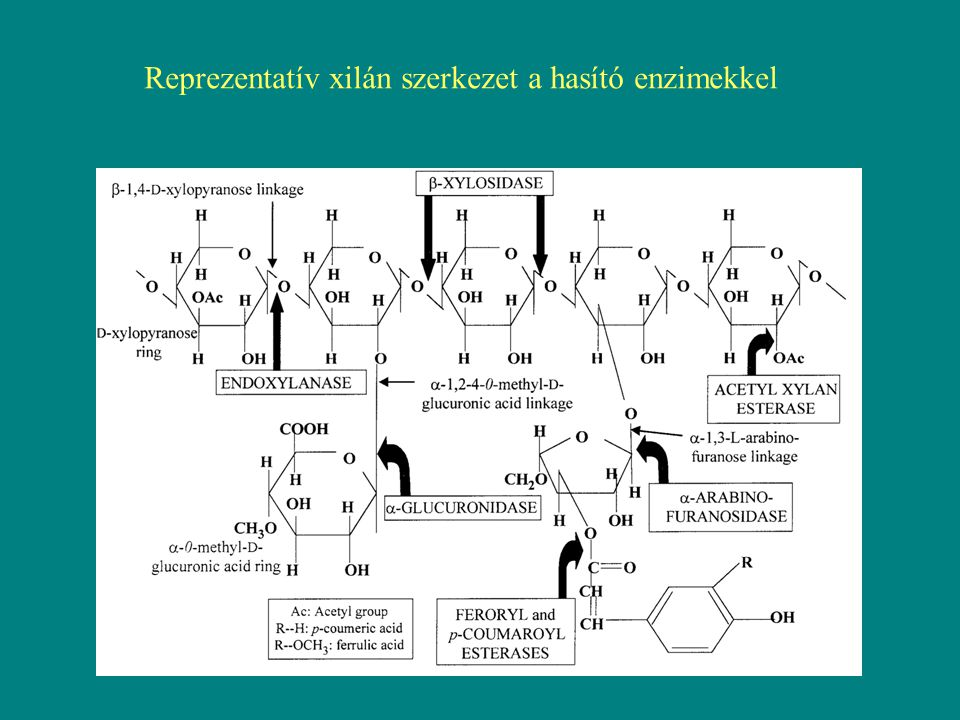 3.Cellulóz: a legegyszerűbb komponens a lignocellulózban a legelterjedtebb polimer molekula a bioszférában hosszú lánca D-glükóz molekulák β-1,4-es kapcsolatából áll a növényekben támasztó-szerkezeti molekula a cellulózban a glükóz láncok úgy helyezkednek el, hogy egy kristályszerű szerkezetet tudnak létrehozni, ami vízhatlantehát a cellulóz polimer oldhatatlan, és ellenáll a hidrolízisnek hasznos szénforrás, ezért iparilag hasznosítani kellene előszőr ki kell hámozni a lignin-hemicellulóz takaróból ezek után jöhetnek a cellulázok – egy enzimcsoport - endoglükanáz - exoglükanáz - cellobiohidroláz - β-glükozidáz, v.