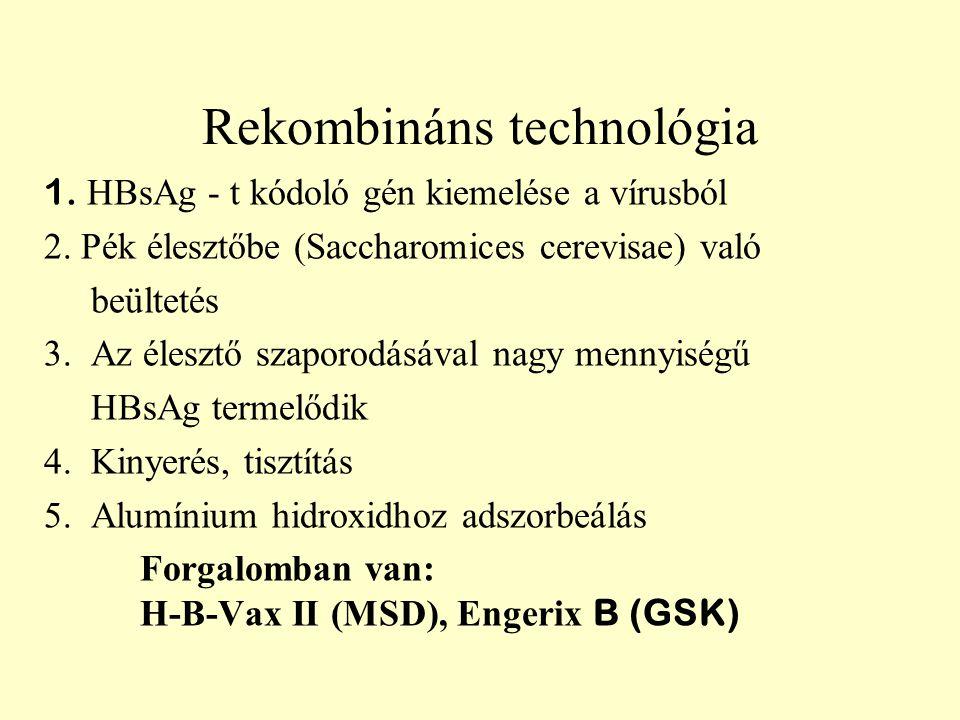 Rekombináns technológia 1. HBsAg - t kódoló gén kiemelése a vírusból 2. Pék élesztőbe (Saccharomices cerevisae) való beültetés 3. Az élesztő szaporodá
