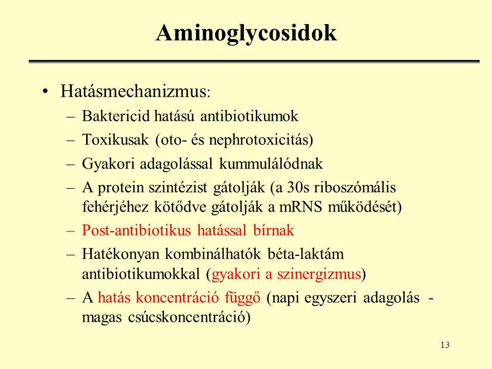 13 Aminoglycosidok Hatásmechanizmus : –Baktericid hatású antibiotikumok –Toxikusak (oto- és nephrotoxicitás) –Gyakori adagolással kummulálódnak –A protein szintézist gátolják (a 30s riboszómális fehérjéhez kötődve gátolják a mRNS működését) –Post-antibiotikus hatással bírnak –Hatékonyan kombinálhatók béta-laktám antibiotikumokkal (gyakori a szinergizmus) –A hatás koncentráció függő (napi egyszeri adagolás - magas csúcskoncentráció)