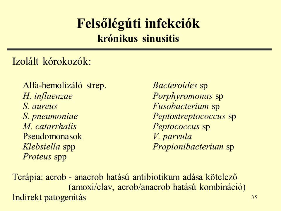 35 Felsőlégúti infekciók krónikus sinusitis Izolált kórokozók: Alfa-hemolizáló strep.Bacteroides sp H.