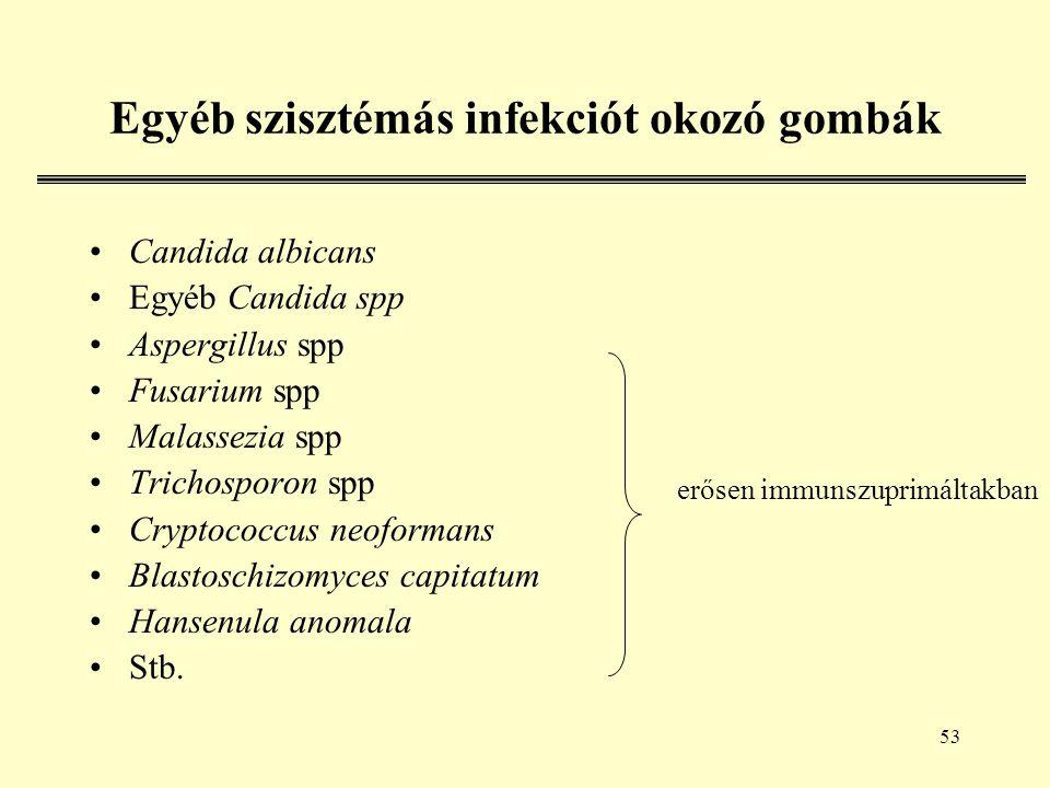 53 Egyéb szisztémás infekciót okozó gombák Candida albicans Egyéb Candida spp Aspergillus spp Fusarium spp Malassezia spp Trichosporon spp Cryptococcus neoformans Blastoschizomyces capitatum Hansenula anomala Stb.