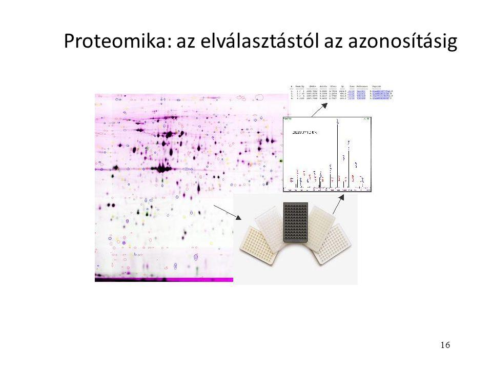 16 Proteomika: az elválasztástól az azonosításig