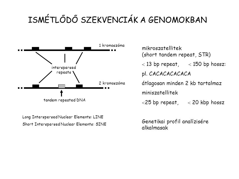 1 kromoszóma 2 kromoszóma interspersed repeats tandem repeated DNA Long Interspersed Nuclear Elements: LINE Short Interspersed Nuclear Elements: SINE