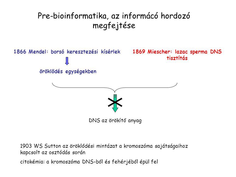Pre-bioinformatika, az informácó hordozó megfejtése 1866 Mendel: borsó keresztezési kísérlek öröklődés egységekben 1869 Miescher: lazac sperma DNS tisztítás DNS az örökítő anyag 1903 WS Sutton az öröklődési mintázat a kromoszóma sajátságaihoz kapcsolt az osztódás során citokémia: a kromoszóma DNS-ből és fehérjéből épül fel