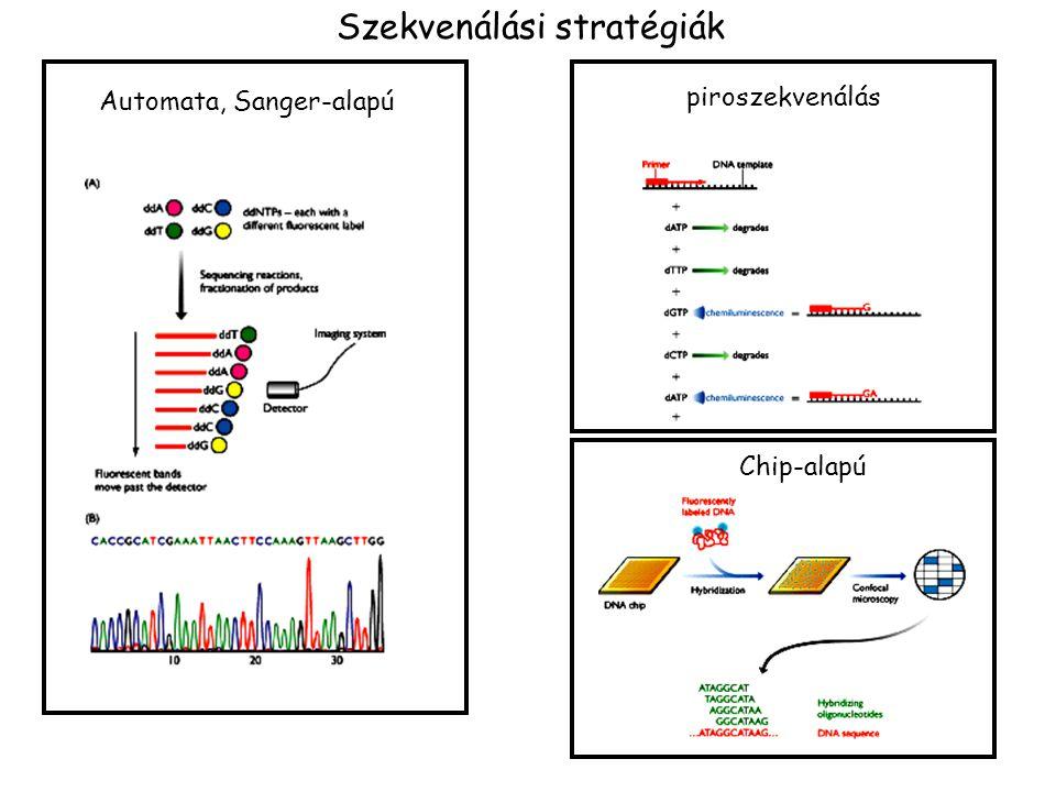 Szekvenálási stratégiák Automata, Sanger-alapú piroszekvenálás Chip-alapú