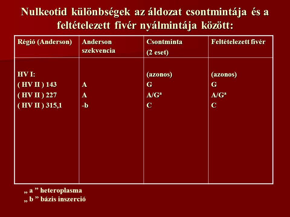 """Nulkeotid különbségek az áldozat csontmintája és a feltételezett fivér nyálmintája között: Régió (Anderson) Anderson szekvencia Csontminta (2 eset) Feltételezett fivér HV I: ( HV II ) 143 ( HV II ) 227 ( HV II ) 315,1 AA-b(azonos)G A/Gª C(azonos)G C """" a heteroplasma """" b bázis inszerció"""
