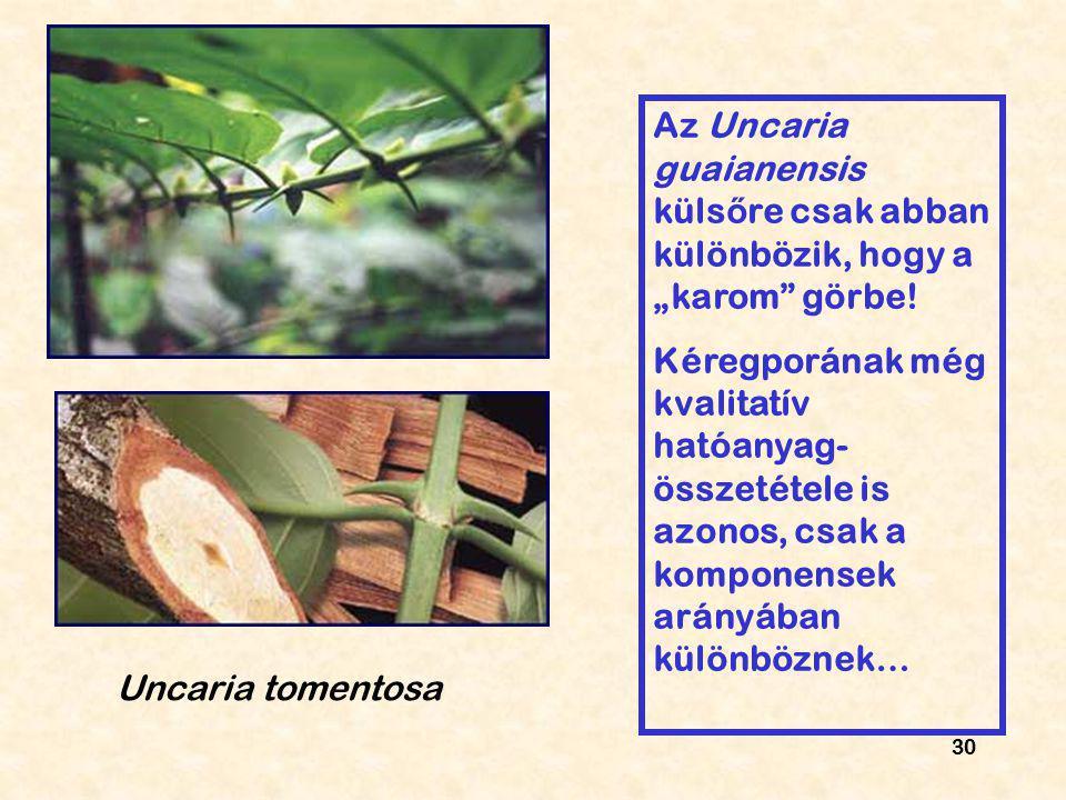 """30 Uncaria tomentosa Az Uncaria guaianensis küls ő re csak abban különbözik, hogy a """"karom"""" görbe! Kéregporának még kvalitatív hatóanyag- összetétele"""
