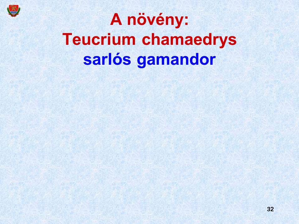 32 A növény: Teucrium chamaedrys sarlós gamandor