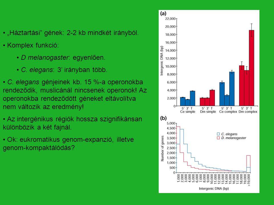 """""""Háztartási"""" gének: 2-2 kb mindkét irányból. Komplex funkció: D melanogaster: egyenlően. C. elegans: 3' irányban több. C. elegans génjeinek kb. 15 %-a"""