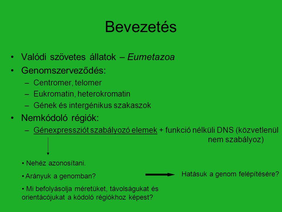 Bevezetés Valódi szövetes állatok – Eumetazoa Genomszerveződés: –Centromer, telomer –Eukromatin, heterokromatin –Gének és intergénikus szakaszok Nemkó