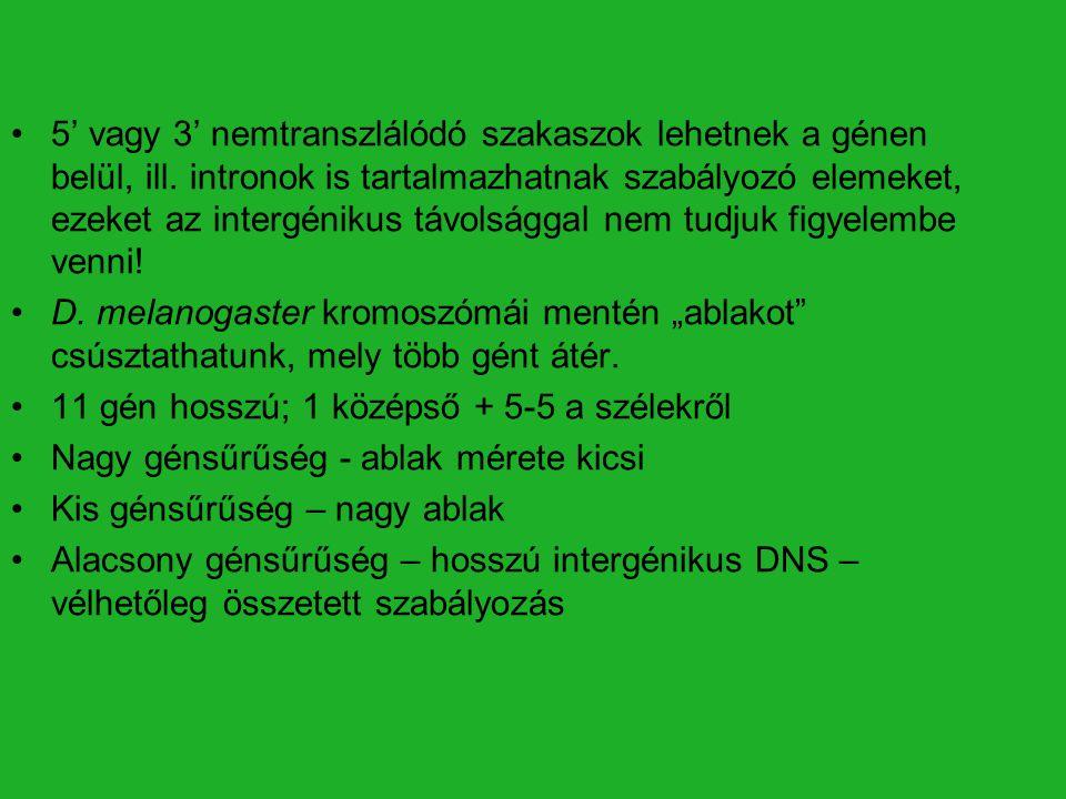 5' vagy 3' nemtranszlálódó szakaszok lehetnek a génen belül, ill. intronok is tartalmazhatnak szabályozó elemeket, ezeket az intergénikus távolsággal