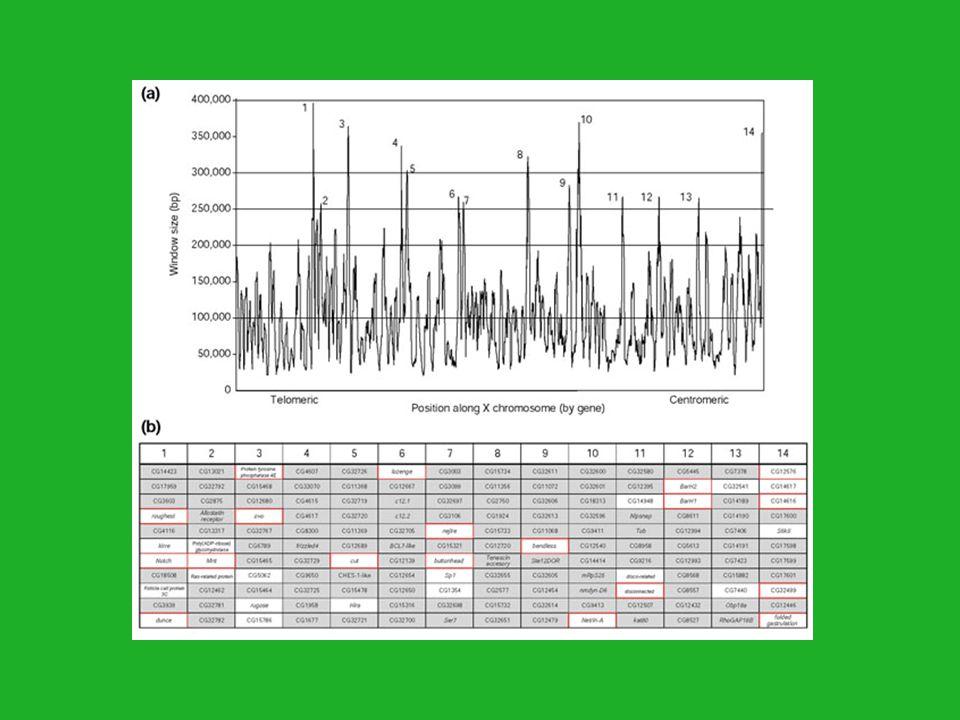 Az egyedfejlődésben kiemelkedő szerepe játszó gének többnyire transzkripciós faktorokat, jelátvivő molekulákat kódolnak.