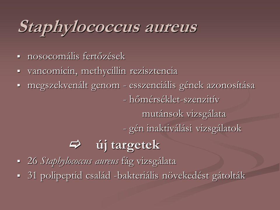Staphylococcus aureus  nosocomális fertőzések  vancomicin, methycillin rezisztencia  megszekvenált genom - esszenciális gének azonosítása - hőmérséklet-szenzitív - hőmérséklet-szenzitív mutánsok vizsgálata mutánsok vizsgálata - gén inaktiválási vizsgálatok - gén inaktiválási vizsgálatok  új targetek  új targetek  26 Staphylococcus aureus fág vizsgálata  31 polipeptid család -bakteriális növekedést gátolták