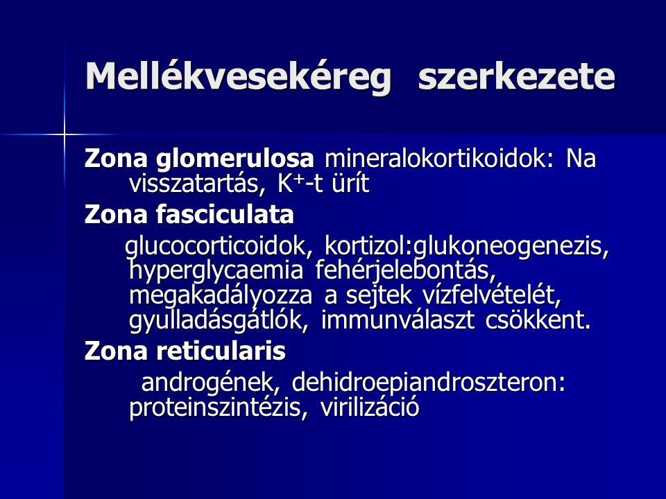 Conn-syndroma A hypertoniás betegek 0,5%-a Klinikai tünetei: Hypertonia fejfájással, esetlegesesen szervkárosodással Hypertonia fejfájással, esetlegesesen szervkárosodással Hypokalaemia tünetei: izomgyengeség, obstipáció, EKG eltérések Hypokalaemia tünetei: izomgyengeség, obstipáció, EKG eltérések Polyuria (főleg éjjel), polydypsia, hypostenuria=renalis diabetes insipidus Polyuria (főleg éjjel), polydypsia, hypostenuria=renalis diabetes insipidus Metabolikus alkalosis érzészavarokkal Metabolikus alkalosis érzészavarokkal Kezelés: érintett mellékvese eltávolítása spironolacton előkezelés után