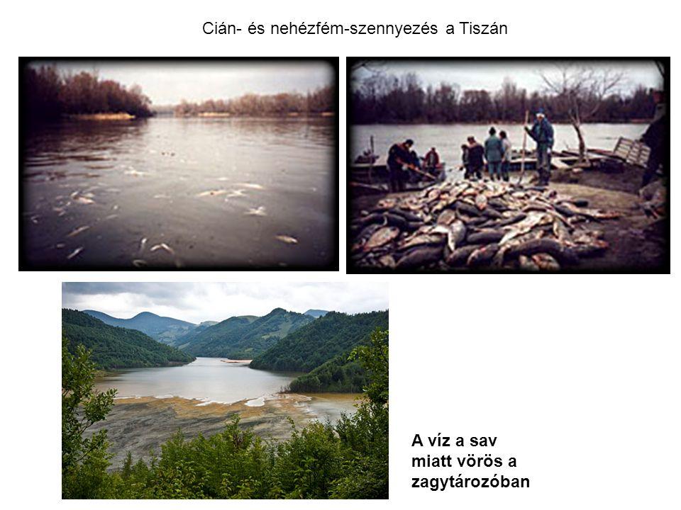 Cián- és nehézfém-szennyezés a Tiszán A víz a sav miatt vörös a zagytározóban