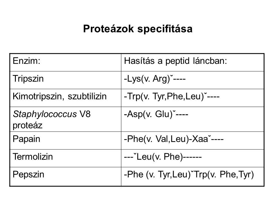 Proteázok specifitása Enzim:Hasítás a peptid láncban: Tripszin-Lys(v. Arg)ˇ---- Kimotripszin, szubtilizin-Trp(v. Tyr,Phe,Leu)ˇ---- Staphylococcus V8 p