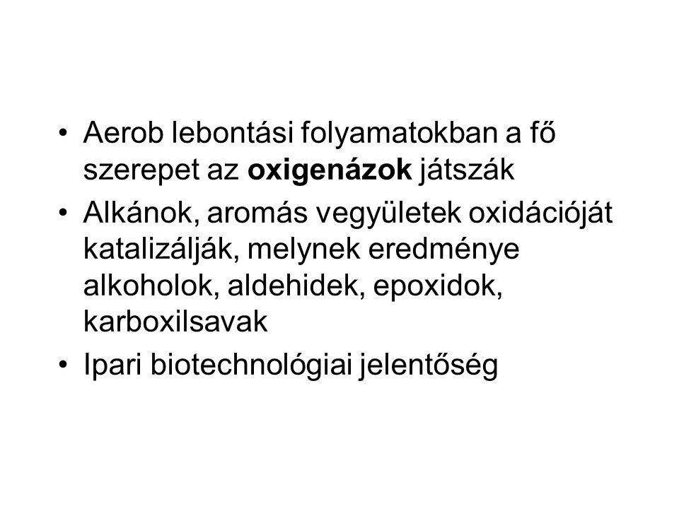Aerob lebontási folyamatokban a fő szerepet az oxigenázok játszák Alkánok, aromás vegyületek oxidációját katalizálják, melynek eredménye alkoholok, al