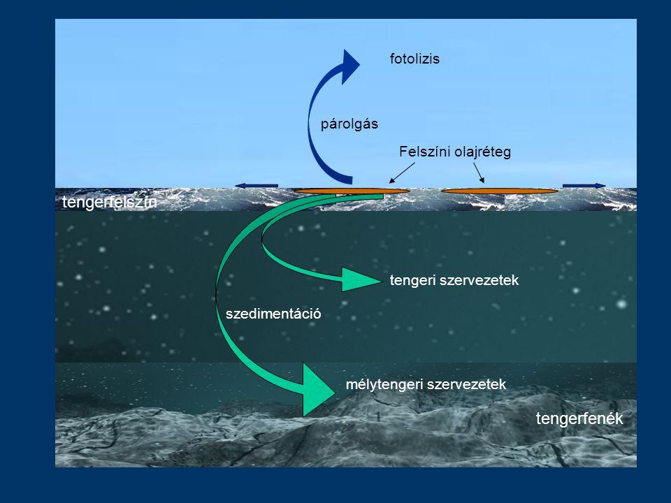 tengerfenék tengerfelszín Felszíni olajréteg párolgás szedimentáció mélytengeri szervezetek tengeri szervezetek fotolizis